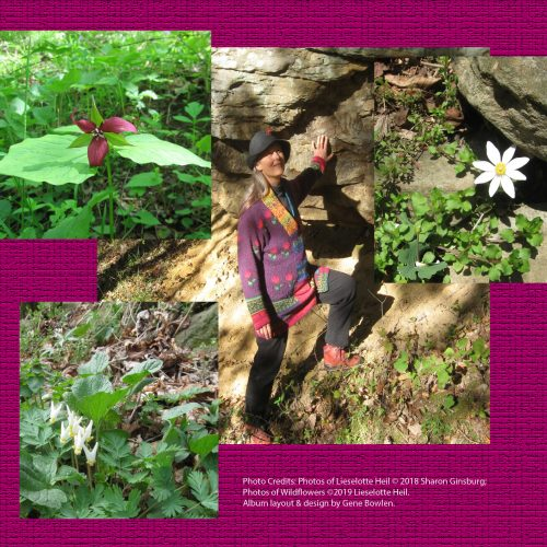 West Virginia wildflowers and EP info